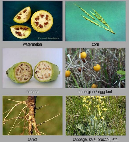 Non-genetically modified food