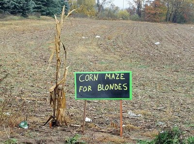 Corn Maze for blondes