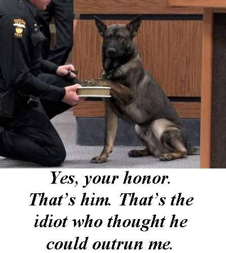Dog day in court