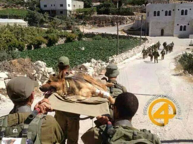 Israelis care for dogs