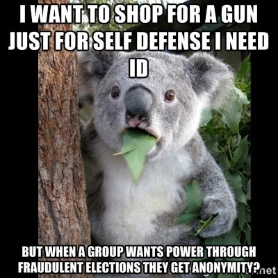 Koala and gun