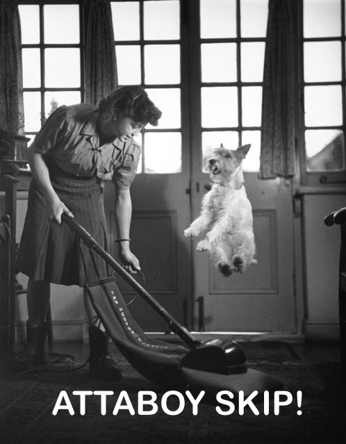 Doggy and vacuum cleaner