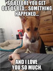 Apologetic doggy