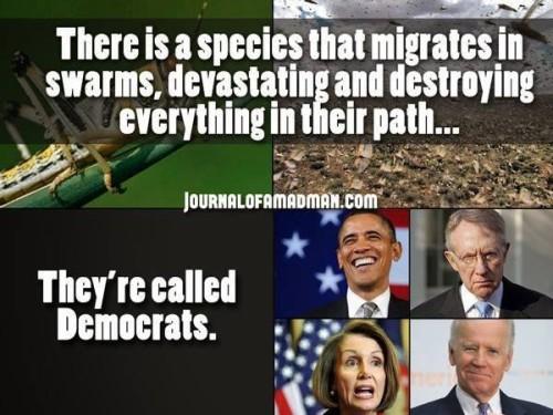 swarming destructive democrats
