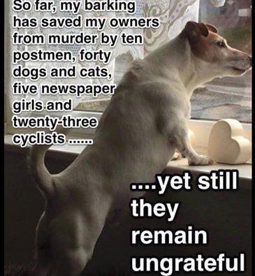 Ungrateful humans says dog