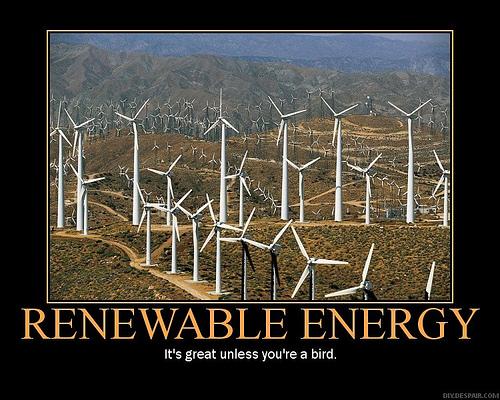 Windmills and birds