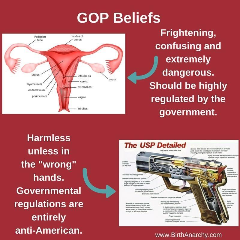Uterus compared to gun