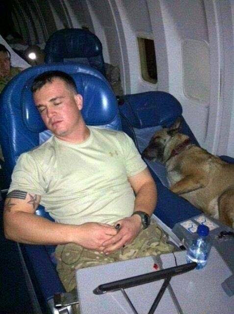 Troops and dogs 1