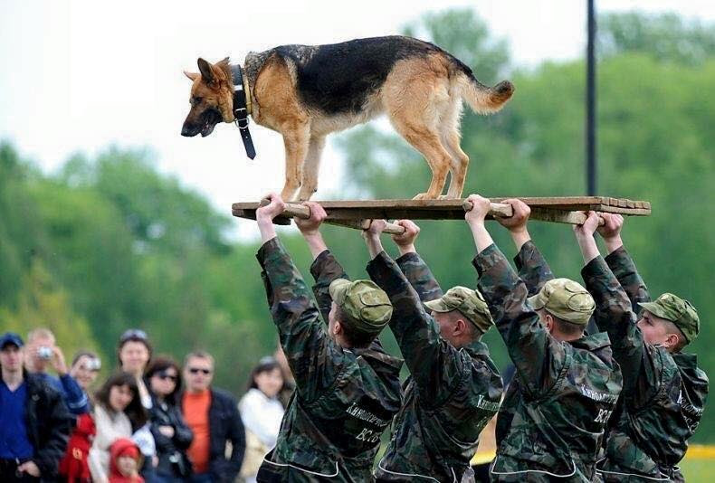 Troops and dogs 5