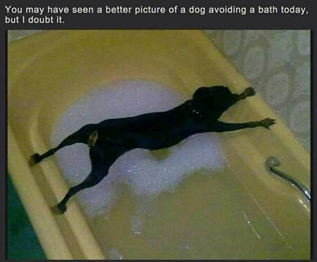 Silly Dog avoiding bath