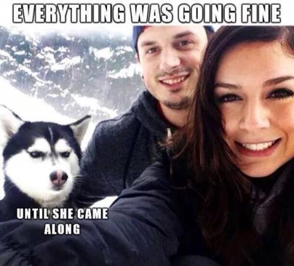 Silly Jealous dog photo