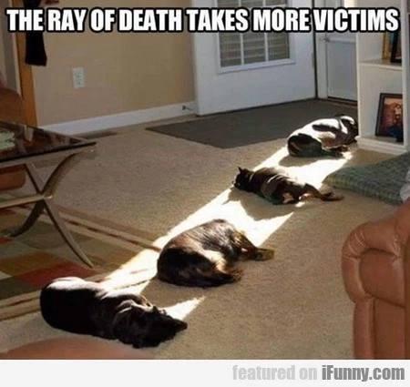 silly-ray-of-death-sun-makes-animals-sleep