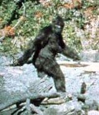 Big Foot and Climate Change