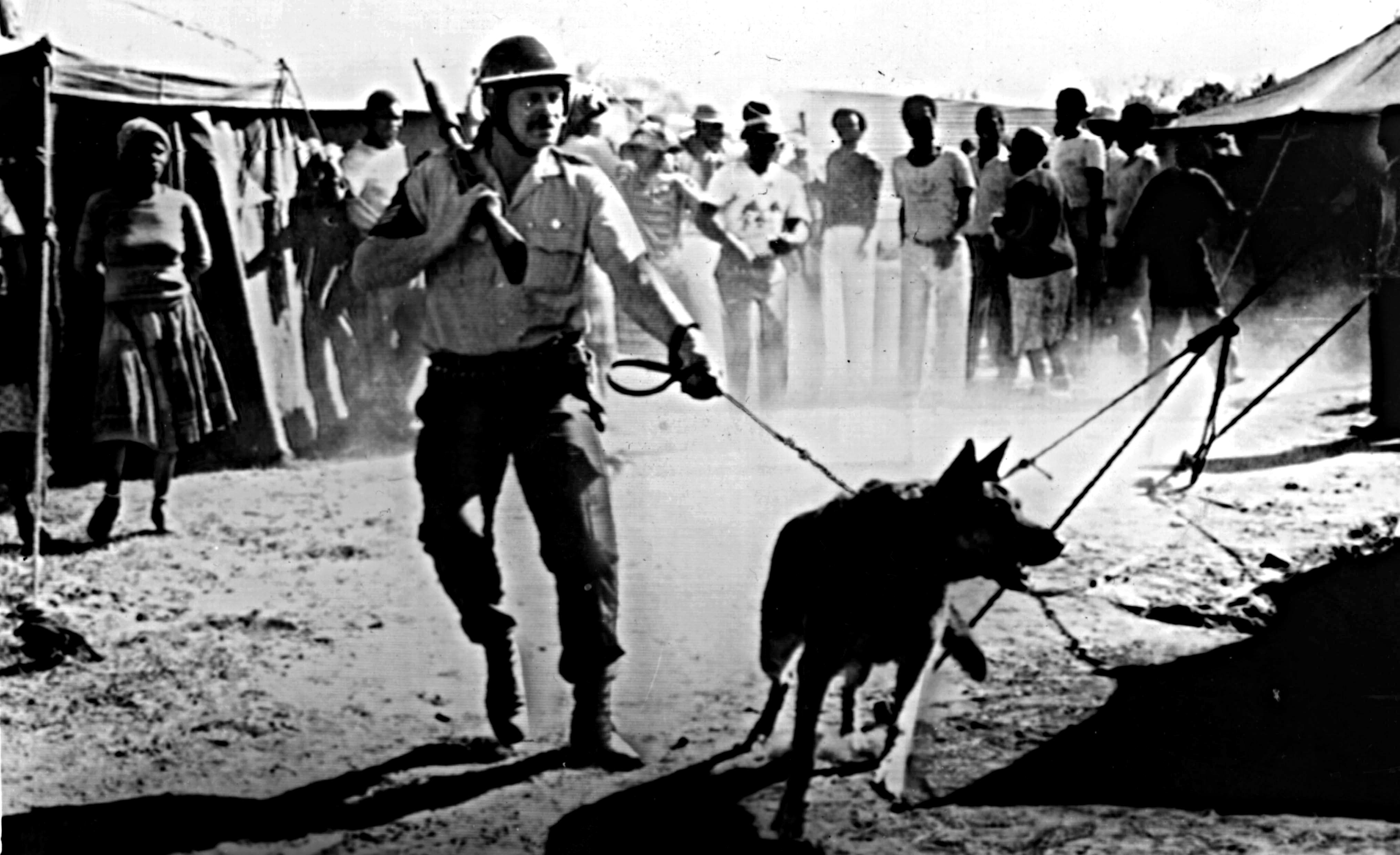 Trevor Noah South Africa Apartheid Second Amendment Gun Control