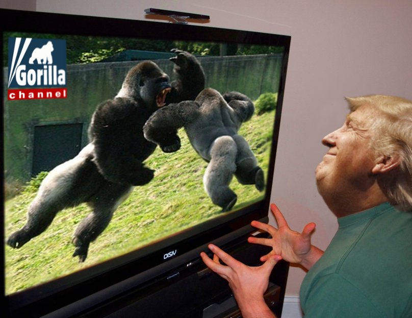 Gorilla Channel joke